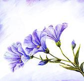 Fleurs sauvages. peinture aquarelle. — Photo
