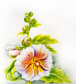 Hollyhock flowers. Watercolor — Stock Photo