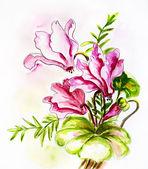 Cyclamens. Watercolor painting. — ストック写真