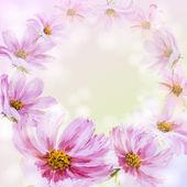 Cosmos flowers background. — Stock Vector