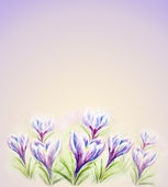 Painted watercolor card with crocus flowers — Stock Photo