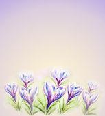 Tarjeta acuarela pintada con flores de azafrán — Foto de Stock