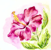 Pink hibiscus, watercolor painting. — 图库照片
