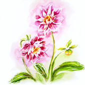 Pink dahlia, watercolor painting. — 图库照片