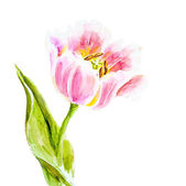 Pink tulips, watercolor painting. — Foto Stock
