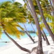 tropical beach — Stock Photo #14810111