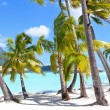 Palms at a tropical beach — Stock Photo