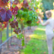 Young woman at a vineyard - Stock Photo