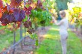 Young woman at a vineyard — Stock Photo