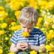 Boy at flower field — Stock Photo #24538725