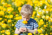 Boy at flower field — Stock Photo