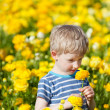 Cute boy at the flower field — Stock Photo #24978947