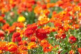 盛开的鲜花, — 图库照片
