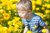 Boy at flower field — Stock Photo