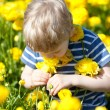 Child at the blooming field — Stock Photo