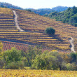 Fall at wine country — Stock Photo #35162427