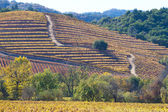 Fall at wine country — Stock Photo