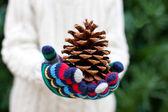 Close-up of tree cone — Photo