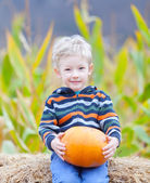 Boy at pumpkin patch — Stok fotoğraf