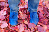 Suede boots in autumn leaves — Stock Photo