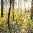 Sunset in the forest — Stock Photo #12841172