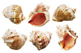 Shell mollusks set — Stock Photo