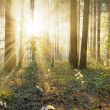 Sunset in the forest — Stock Photo #13896071