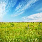 Beautiful sky and summer fields — Stockfoto
