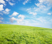 Summer fields — Stock Photo