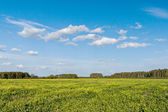 Sky and summer fields — Stock Photo