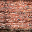 Brick wall — Stock Photo #35436355