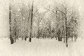 Frozen woods — Stockfoto
