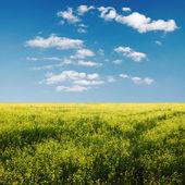 Sky och fält — Stockfoto