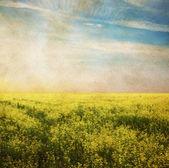 Hemel en veld — Stockfoto