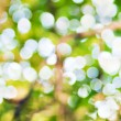 summer bokeh — Stock Photo