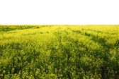 Fields isolated — Stock Photo