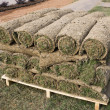 Grass Lawn - Turfs ready to be rolled — Stock Photo