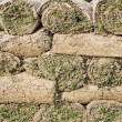 Lawn, folded into rolls — Stock fotografie