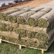 New lawn, folded into rolls — Stock Photo