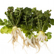 Daikon - white Chinese (Japanese) radish with a highly branched - Stock Photo