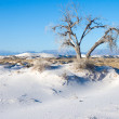 "The tree on the edge of the white desert. U.S. National Parks ""W - Stock Photo"