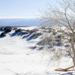 Постер, плакат: The tree on the edge of the white desert U S National Parks W