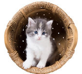Fluffiga kattunge i en korg — Stockfoto