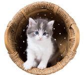 Fluffy kitten in a basket — Stock Photo