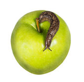 Slug on a green apple isolated on white background — Stock Photo