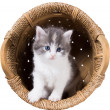 Fluffy kitten in a basket — Stock Photo