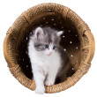 Stock Photo: Fluffy kitten gets out of basket isolated on white backgro