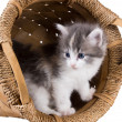 Stock Photo: Lovely fluffy kitten in a round basket isolated on white backgro