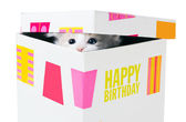 Birthday gift. Kitten peeking through the crack between the lid — Stock Photo