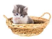 üç renk beyaz bir backgrou izole bir sepet içinde kedi yıkar — Stok fotoğraf
